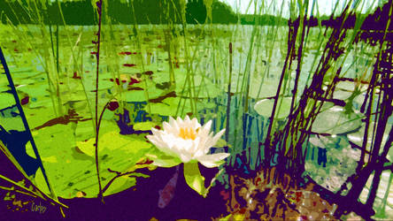 Lone Lily by TomCarlos