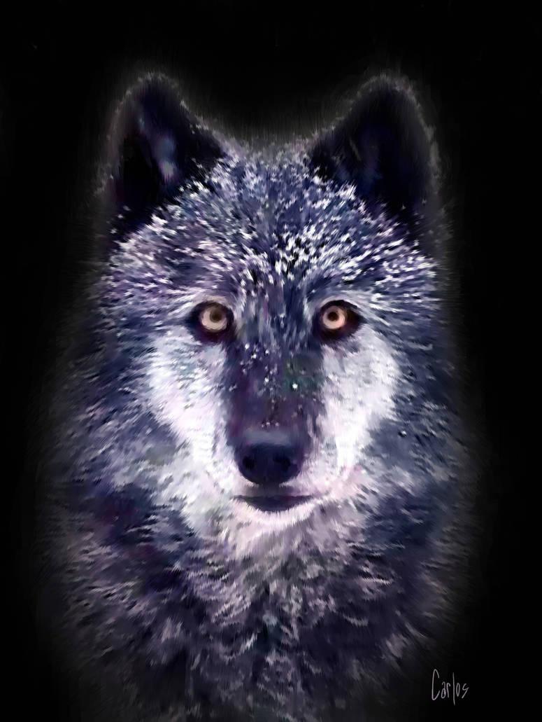 Wolf by TomCarlos