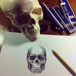 Skull by emilio-rizzo