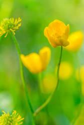 Yellow Dreams by okhascorpio