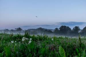 Flying In The Mist by okhascorpio