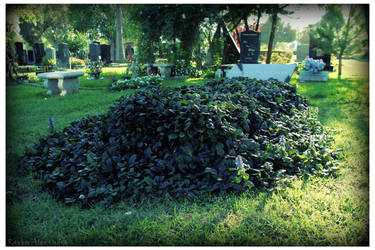 Hollywood Forever Ivy Grave by RavenA938