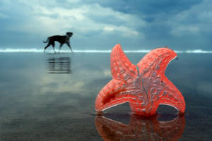 Marine Predators by ahermin
