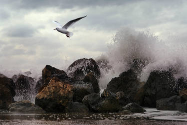 .The Albatross. by ahermin