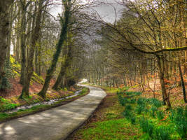 park path by derrybarry