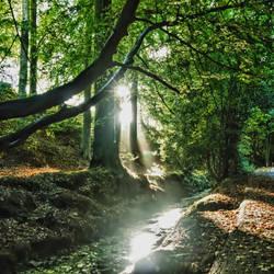 autumn sunbeam 2 by derrybarry