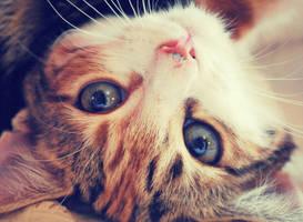 .Cute. by nina-nightmare-x