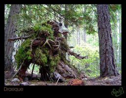 Forest Guardian: Draeque by WonderDookie