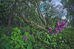 Forest stuff by jodroboxes