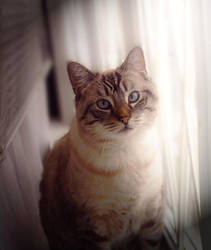 Kitty by Katara925