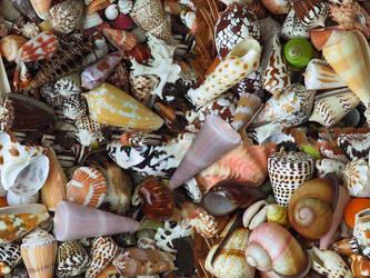 Shells 2 by lylejk