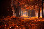 autumn forest by emjot72