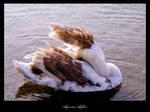 Swan by AmorinaAshton
