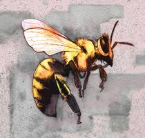 abeille by claratessier