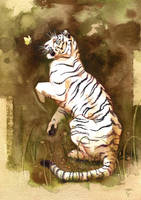 tigre blanc by claratessier