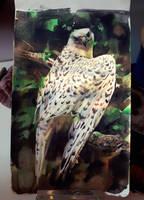 faucon gerfaut by claratessier