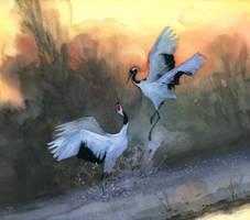 ballet des grues by claratessier