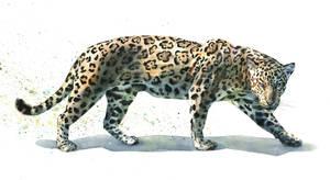 Jaguar by claratessier