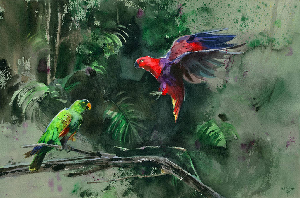 eclectus by claratessier