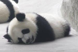 Sleepy Panda by Artsee1