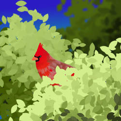 Cardinal by cutecatandrabbit