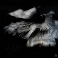 halucynacje 1.20 by Borlin