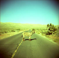 burro by bluecitrusart
