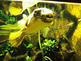 Cuuute Fishy by Veta94