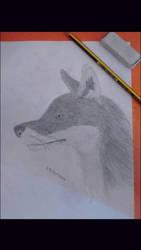 2- Fox by Ghang