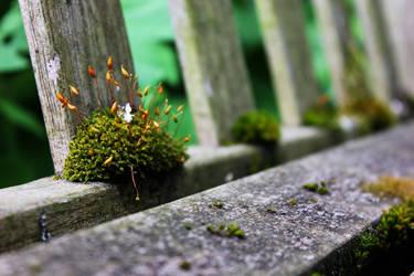 On the Bench by FalseShepherd