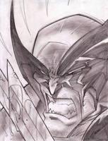 Wolverine Sketch Shot by StevenSanchez