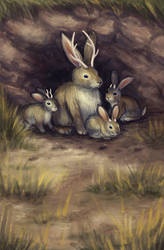 Jackalopes by pyro-helfier