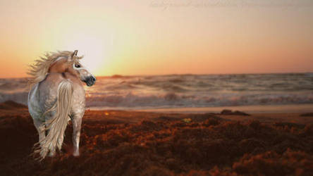 Sunset dreaming by DressageRider4life