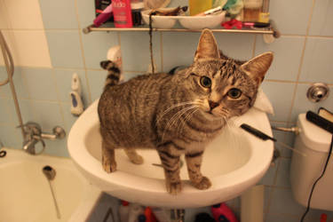 Killer Kitty sees everything by Liniiii