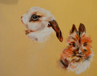 the rabbits by niitsvee