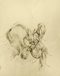 anatomical drawing 07 bones of the pelvic girdle by niitsvee