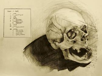 anatomical drawing 02 bones of the skull by niitsvee