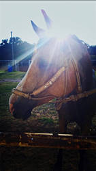 Glitter, i need to change her name by breyerlover321