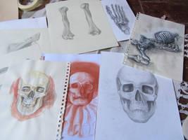 Anatomy dump 1 by angel-poloo