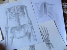 Anatomy dump 2 by angel-poloo