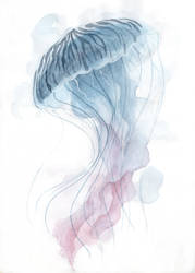 Watercolor Jellyfish by ThreeLeaves