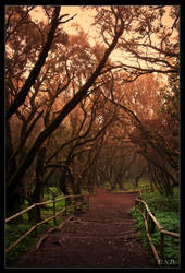 Way To Serenity by Nichofsky