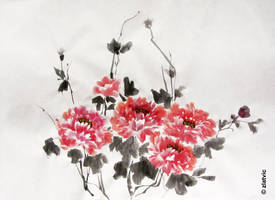 Peonies by zlatvic