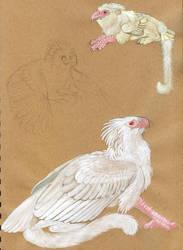 Ceylon Character Sheet by Silenced-Dreams