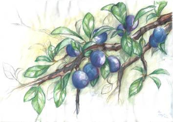 Prunus by moshi-ZUA