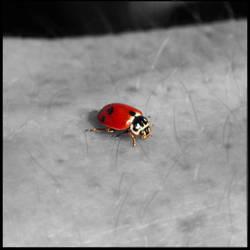 Ladybird by bluEeye93