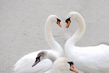 natural love by DoroteaSanto