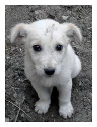 White dog 1 by Visualjenna-Stock