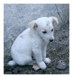 White dog 2 by Visualjenna-Stock