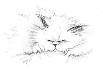 Kitty sketch by danielvijoi
